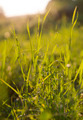 Sunny Grass - PhotoDune Item for Sale