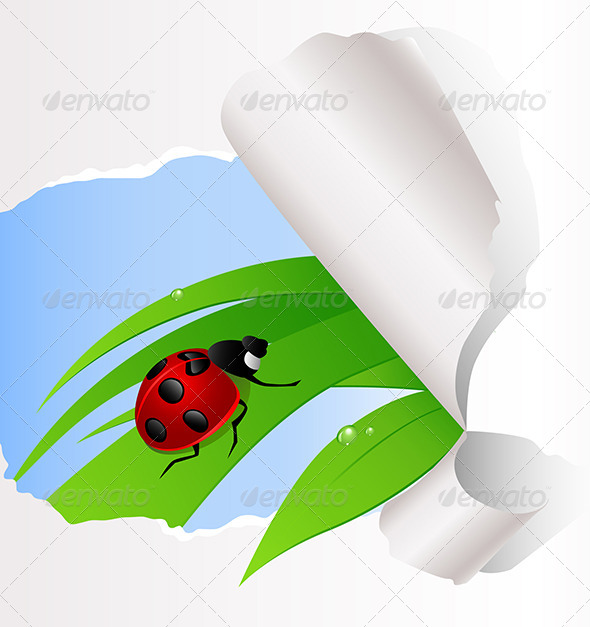 GraphicRiver Ladybird Sitting on Green Grass 5223399