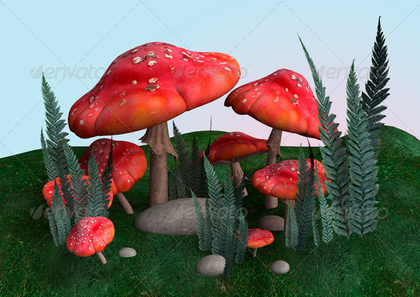 Toadstools  - Stock Photo - Images