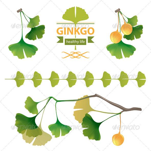 GraphicRiver Ginkgo Biloba 5246346