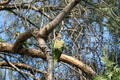 Parrot in the wild - PhotoDune Item for Sale