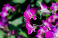 Beautiful bright orchid flowers in Botanical garden - PhotoDune Item for Sale