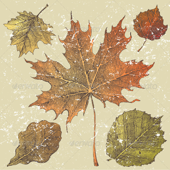 GraphicRiver Autumn Leaves 5252269