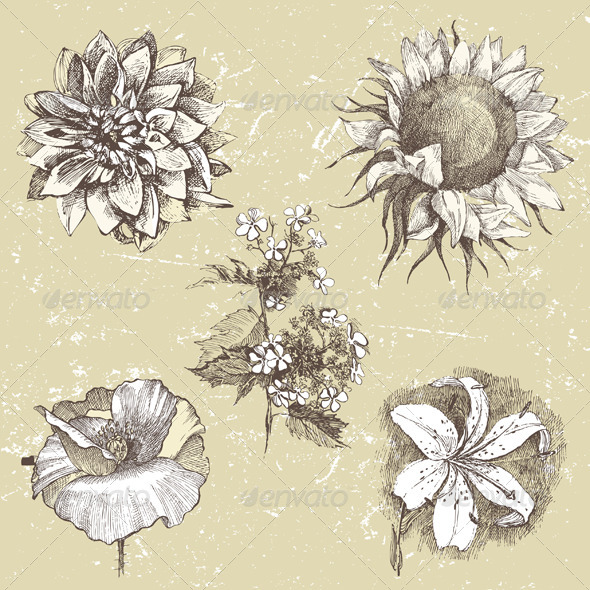 GraphicRiver Hand Drawn Flowers 5252281