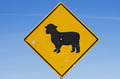 Sheep Road Sign - PhotoDune Item for Sale