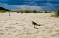 Seagull on the beach before the storm. - PhotoDune Item for Sale