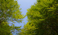 Green Forest and sky - PhotoDune Item for Sale