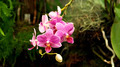 Pink Orchids - PhotoDune Item for Sale