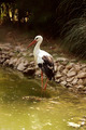 stork having sunbath - PhotoDune Item for Sale