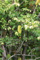 Leaves - PhotoDune Item for Sale