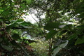Plants in Hawaii - PhotoDune Item for Sale