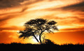 Sunset against acacia tree on african plains - PhotoDune Item for Sale