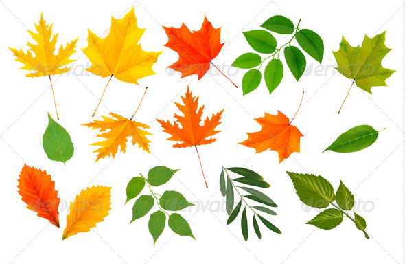 GraphicRiver Big Collection of Colorful Leaves 5296247