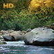 Forest River On A Summer Afternoon - VideoHive Item for Sale