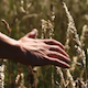 Hand Through Fields - VideoHive Item for Sale