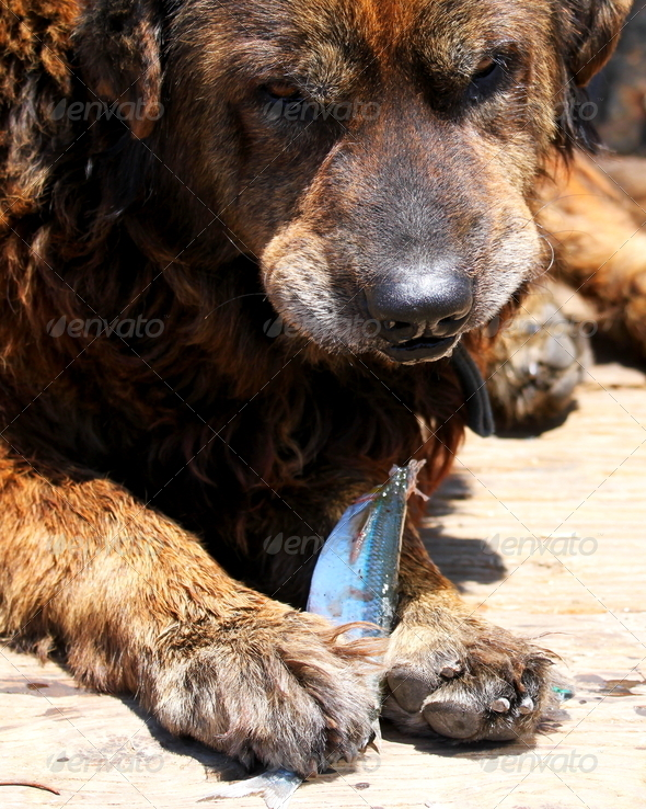 Dog Eating Fish - Stock Photo - Images