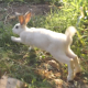 Rabbit Runs In The Field - VideoHive Item for Sale