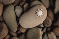 Starfish on Rock - PhotoDune Item for Sale