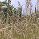 Tall Grass in the Wind - VideoHive Item for Sale