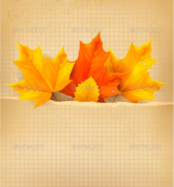 GraphicRiver Autumn Background with Leaves Back to School 5337972