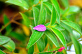 Raindrops on Lone Purple Flower Petal - PhotoDune Item for Sale