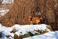 Dog enjoying at snow - PhotoDune Item for Sale