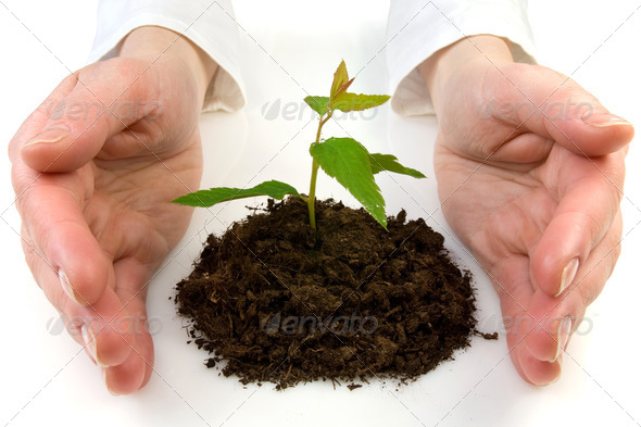 Hands And Plant - Stock Photo - Images