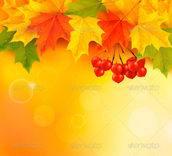 GraphicRiver Autumn Background with Leaves and Rowan 5386031