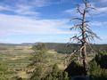 Scenic Landscape With Gnarled Tree - PhotoDune Item for Sale