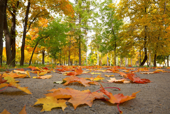 Fall in the Park - Stock Photo - Images