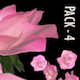 Flower Spurt - Pink Rose - Pack of 4 - VideoHive Item for Sale