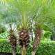 Palm trees in the garden. - PhotoDune Item for Sale