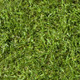 Green Lawn Wallpaper - GraphicRiver Item for Sale