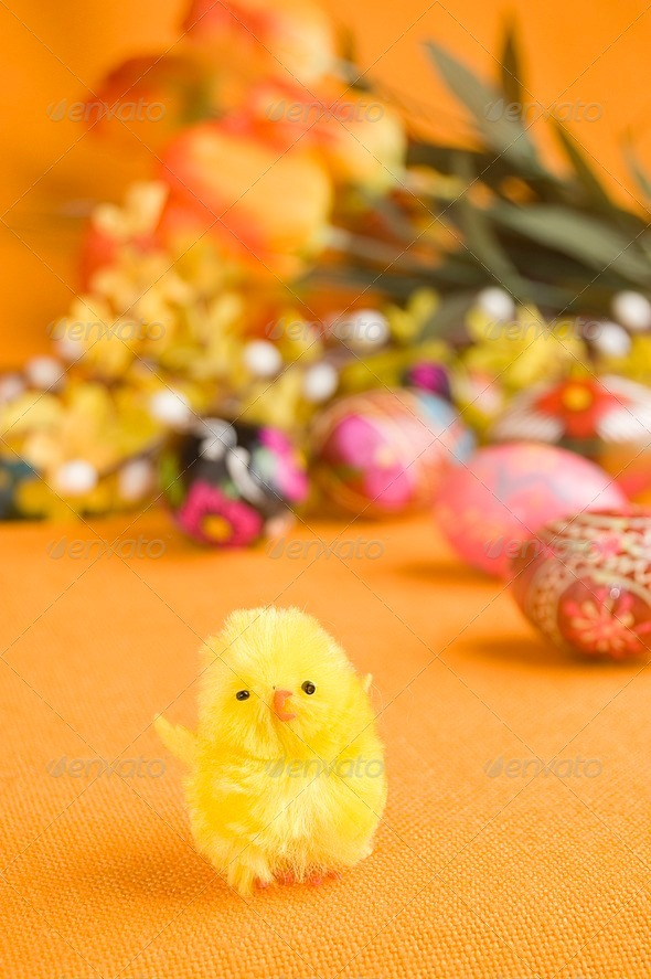 Chicken and easter eggs - Stock Photo - Images