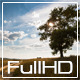Lonely Tree In A Field Time Lapse - VideoHive Item for Sale
