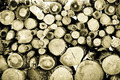 Firewood background - PhotoDune Item for Sale