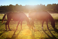 Portrait of a horse grazing - PhotoDune Item for Sale