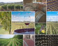 Wineyards and Wineries - PhotoDune Item for Sale