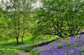 Bluebells on a grassy bank - PhotoDune Item for Sale