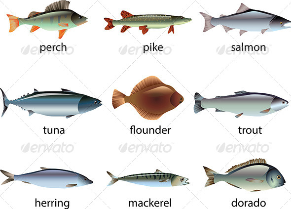 GraphicRiver Popular Species of Fish Vector Set 5453983