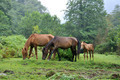 grazing horses - PhotoDune Item for Sale