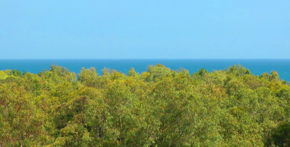 VideoHive Forest and the Sea 5475614