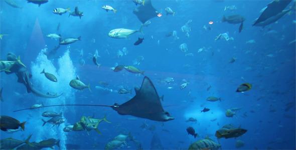VideoHive Ocean Life 5476607