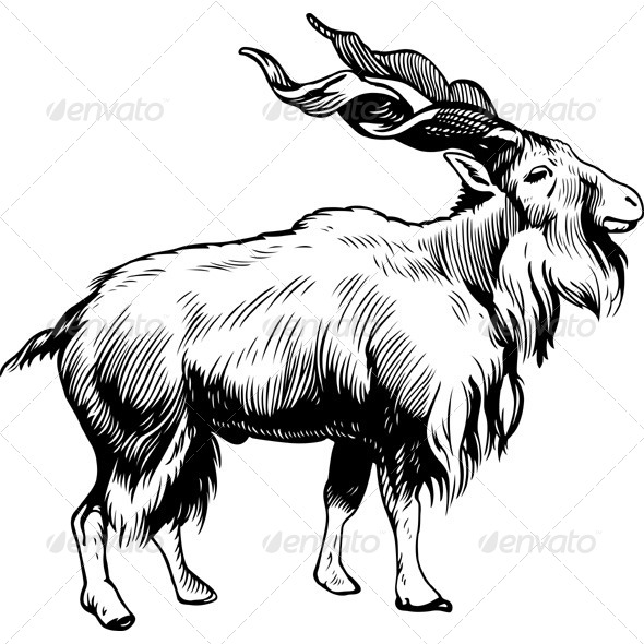 GraphicRiver Animal Markhor Male 5476677