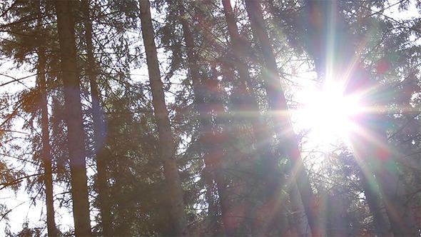 VideoHive Dazzling Sunlight Through Pines 5477036