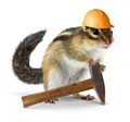 Chipmunk builder, reconstruction concept - PhotoDune Item for Sale