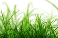 Green Grass Isolated. - PhotoDune Item for Sale