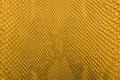 Golden Snake Skin Texture. - PhotoDune Item for Sale