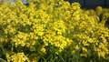 Bright little yellow flowers - PhotoDune Item for Sale