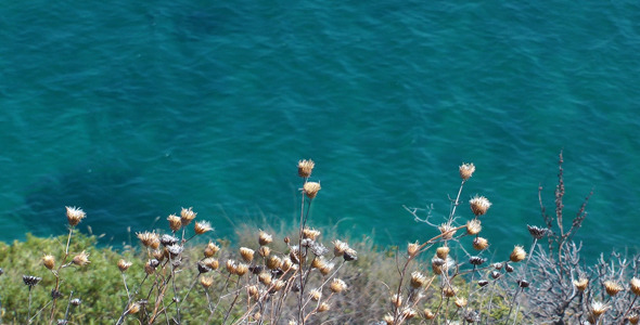 VideoHive Plant and the Sea 5497321